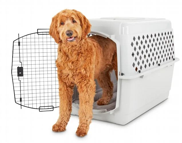 Dog standing halfway in a You and Me Classic Dog Kennel and looking into the camera.
