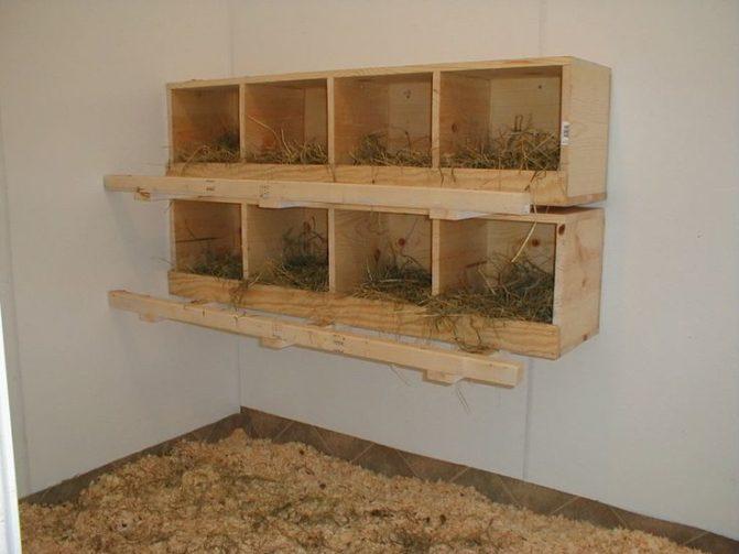 Raised Nesting Boxes