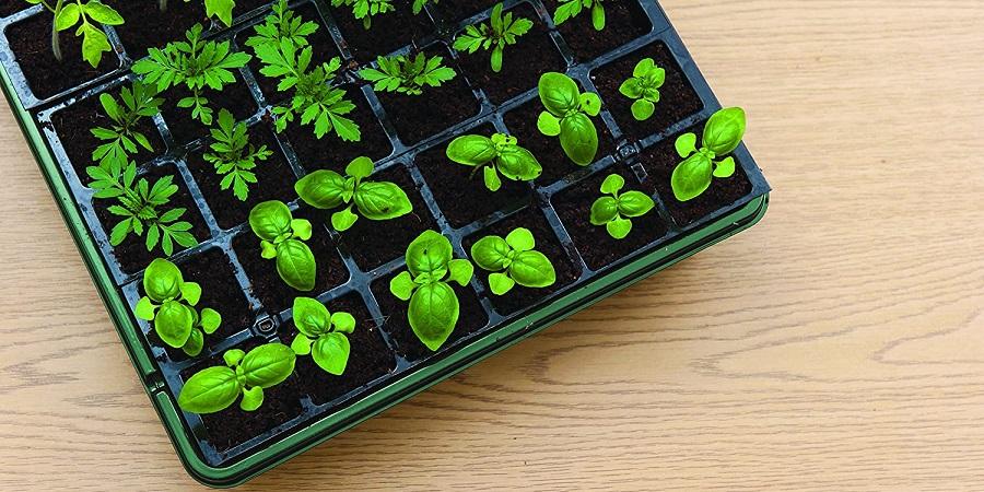 Burpee seed starter kit tray