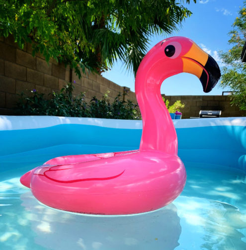 flamingo floaty in a pool with brick fence and trees behind
