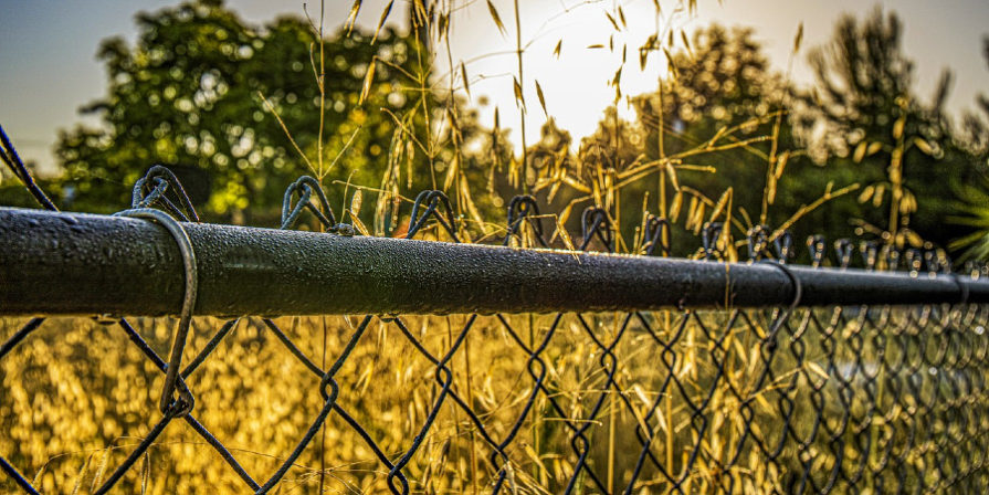 chain link fence with greenery growing around