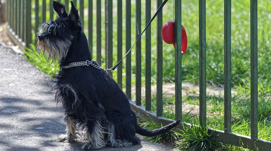 Metal Dog Fence