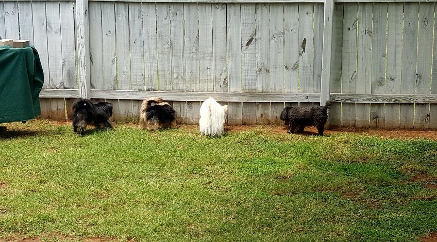 Traditional Dog Fence