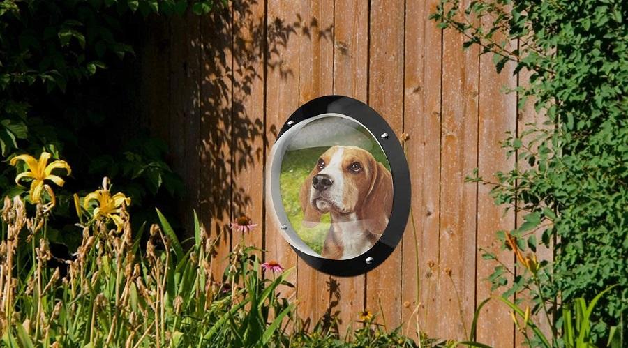 Peep Bubble Dog Fence