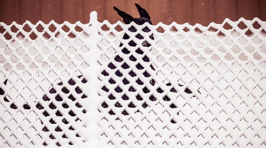 Lattice Dog Fence