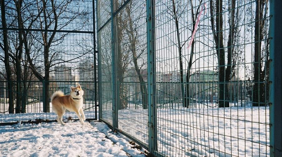 No Jumping Dog Fence