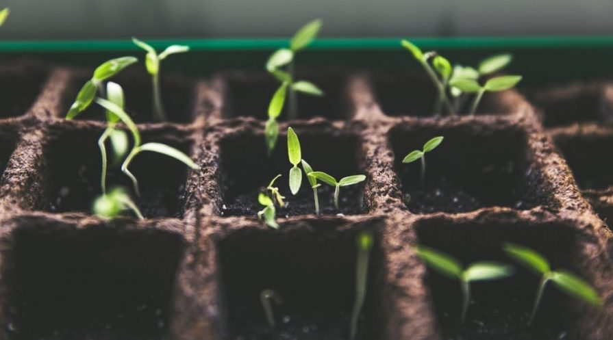 how to germinate seeds feature image
