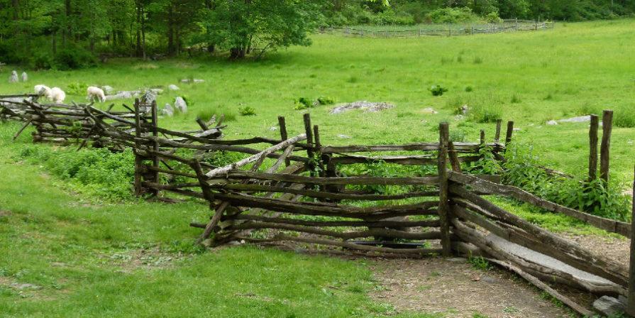 vintage split rail fence in lush green field