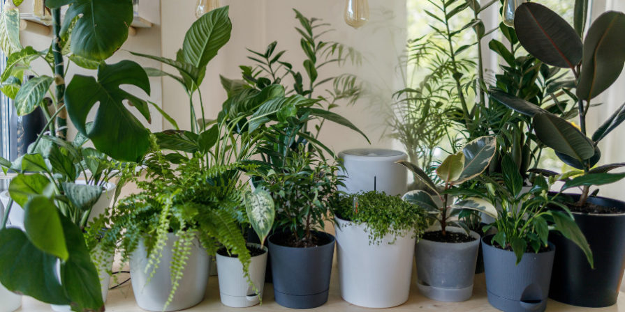potted plants on a desk