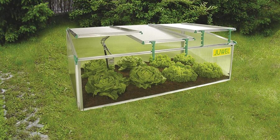 Exaco BioStar cold frame sitting on lawn with lettuce growing inside.