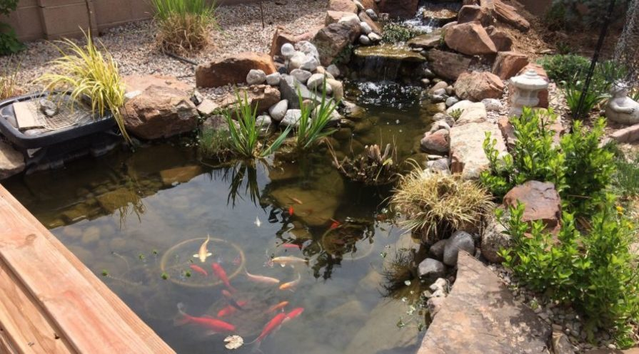 Fish swimming in a pond with a small steps waterfall in the background.