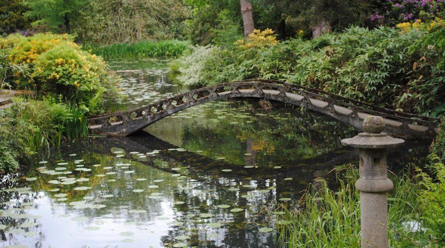 Lush Pond With Concrete Bridge