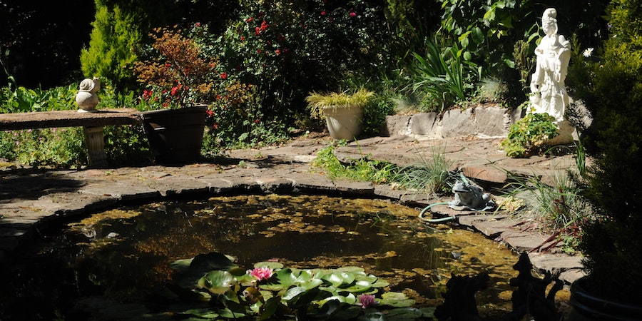 Fish Pond With White Statue