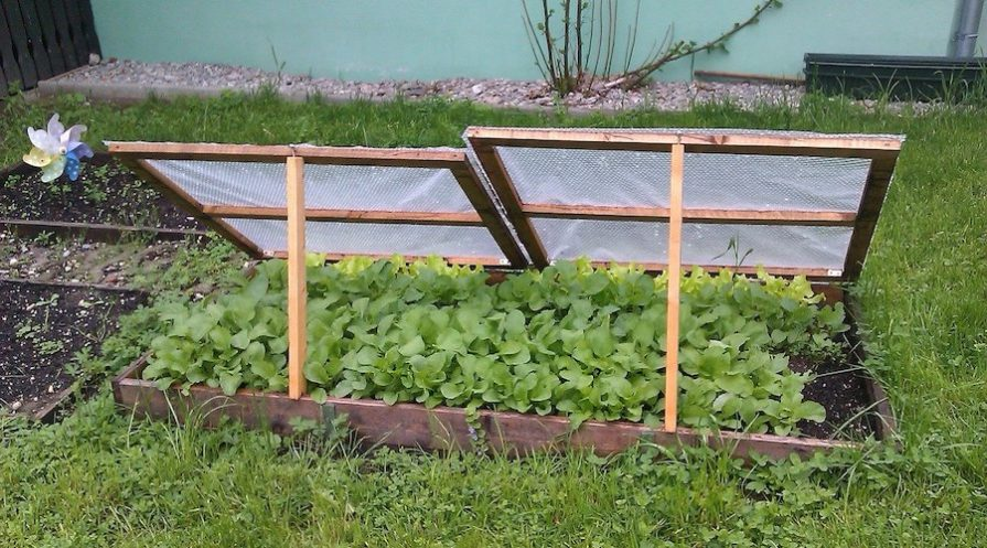 Cold Frame On Raised Bed