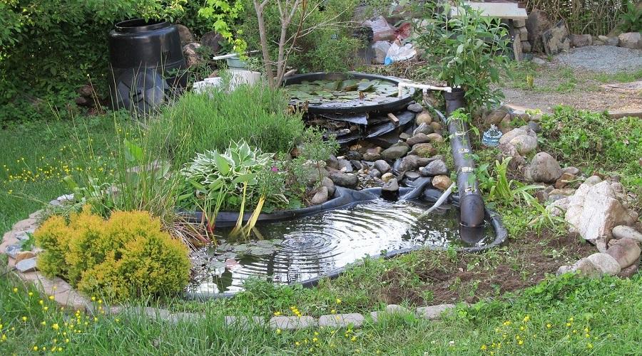backyard pond oasis