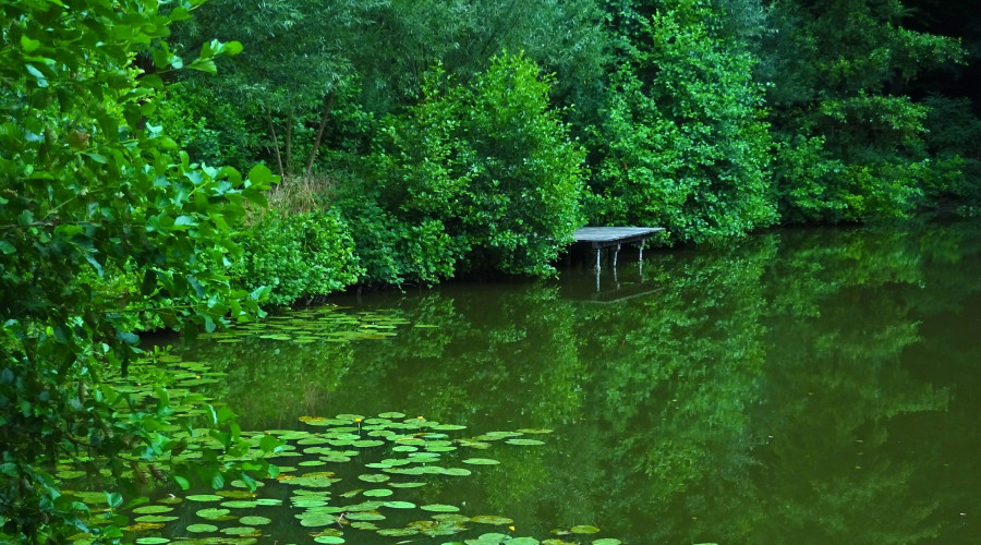green pond with dock and trees in background