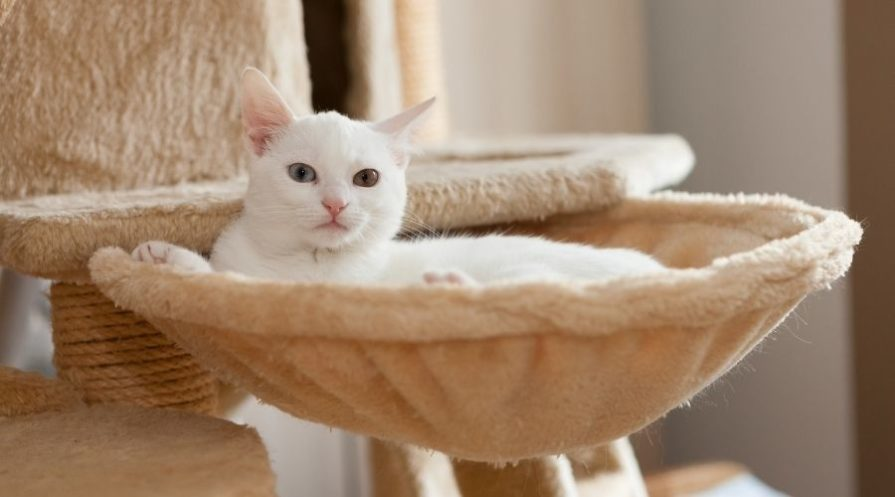 An all white cat laying in a round hammock style cat bed attached to a cat tree.