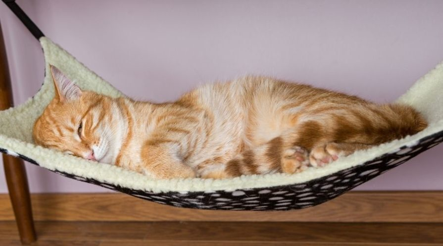 An orange tabby cat sleeping on it's side in a hammock style bed with cream colored fleece on the top and black and white polka dotted fabric on the bottom.