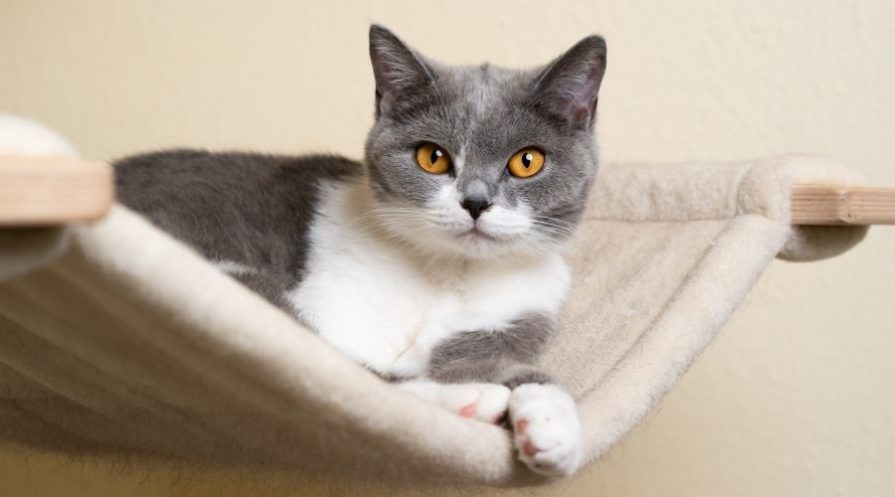 A grey and white cat laying in a cream colored hammock supported by wooden beams.