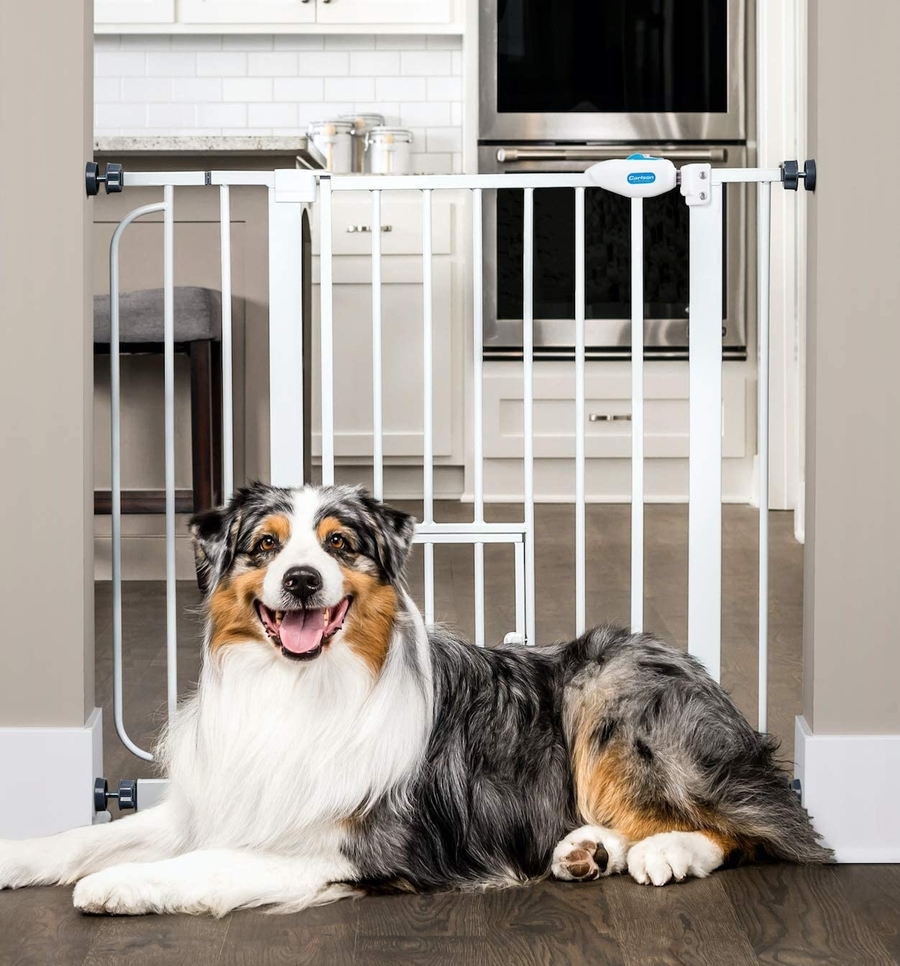 A Collie lies on a wooden floor in front of a pressure mounted dog gate.