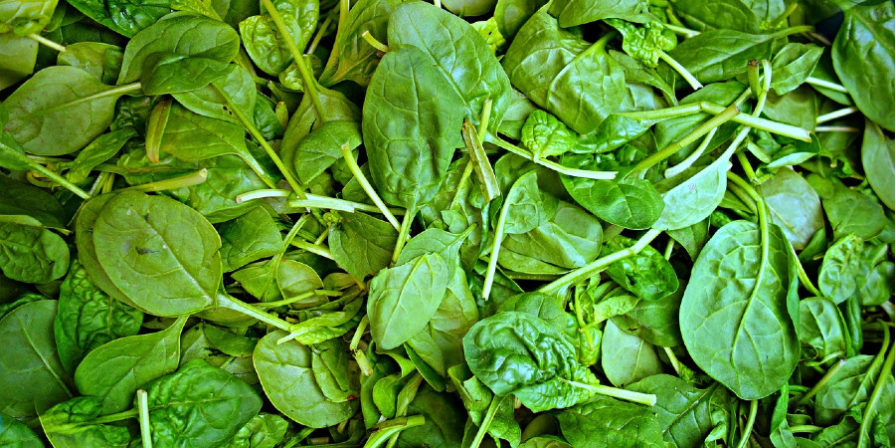 close-up of spinach leaves