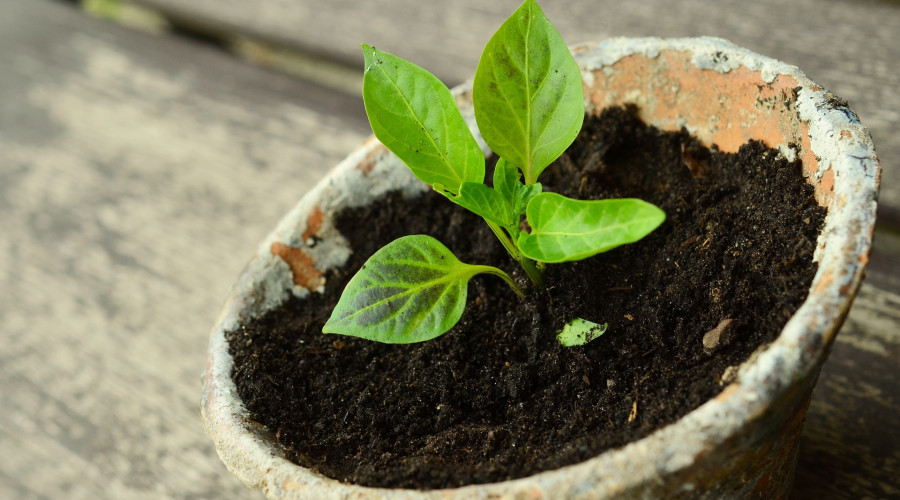 young plant in seasoned terra cotta pot