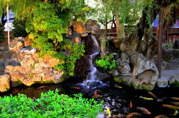 koi pond with waterfall and plants