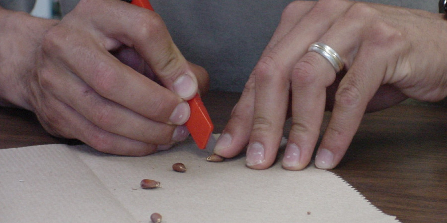 Pair of hands with cutter and seeds