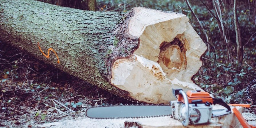 Chainsaw And Felled Tree