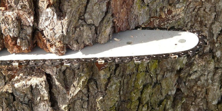 Chainsaw Blade In Tree