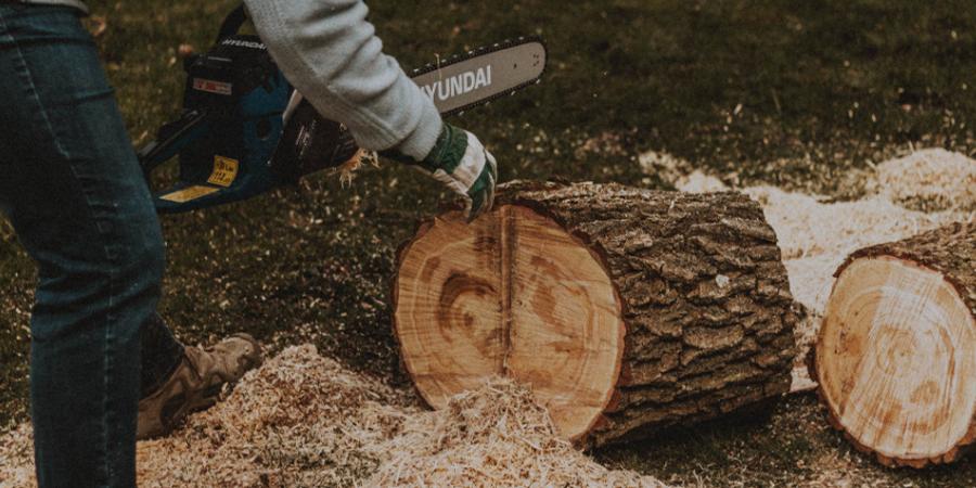 Cutting Large Log