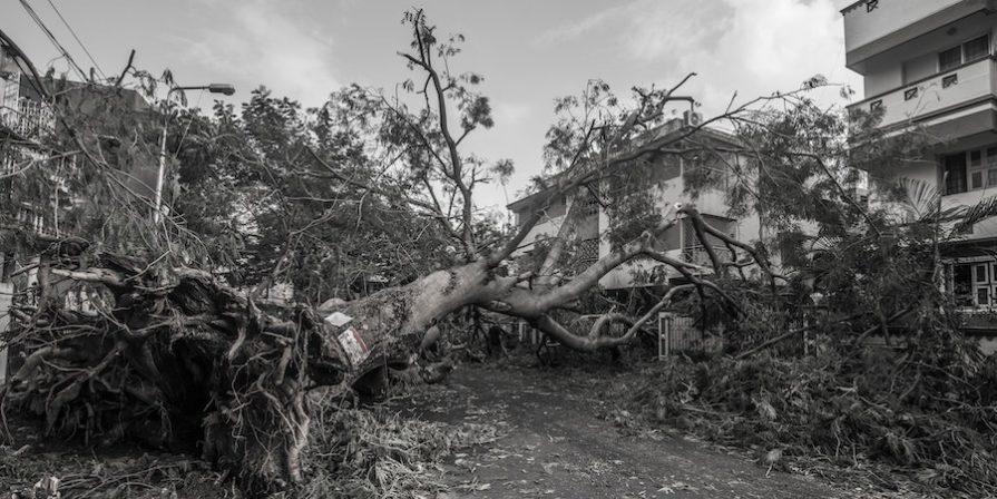 Fallen Tree B&W
