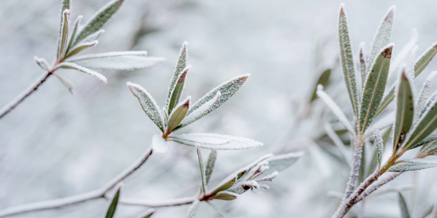 Frosted Over Garden