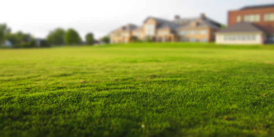 Lawn in front of House