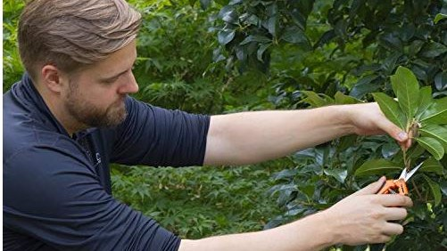Man trimming with pruning shears