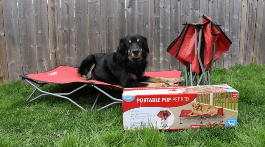 A black dog laying on a red portable dog bed, next to a second bed and a box