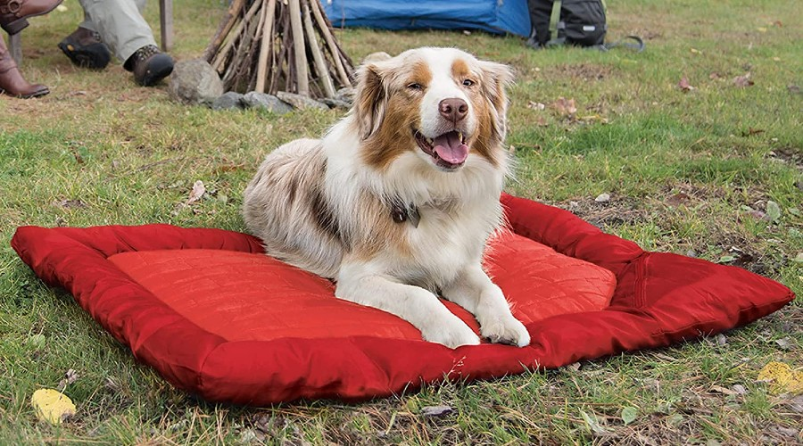 An Australian Shepherd laying on a red dog bed in the grass