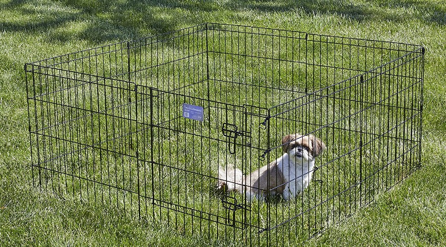 A small brown and white sitting in a black exercise pen in the grass