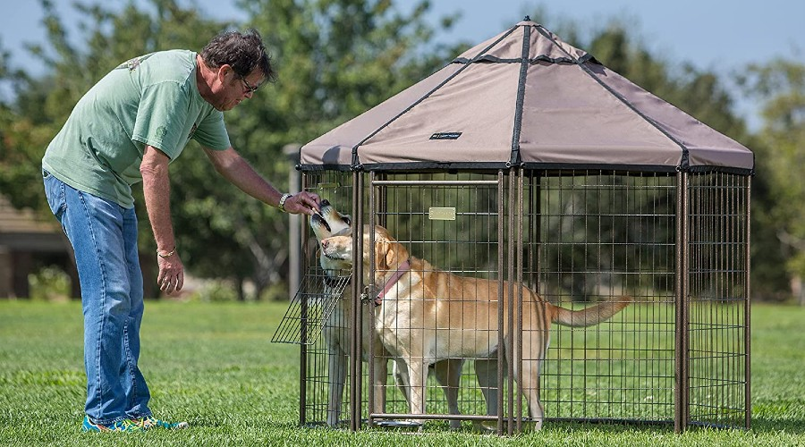 Two golden labs standing inside a metal dog kennel with a cover
