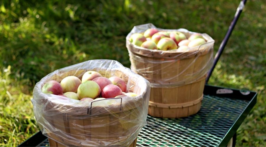 Two wooden baskets filled with apples on a black metal wagon.