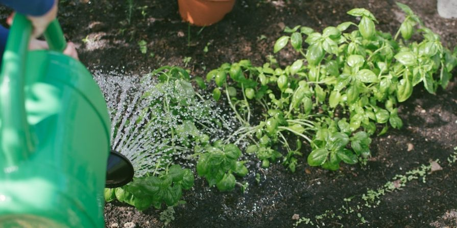 Watering The Garden With Green Watering Can