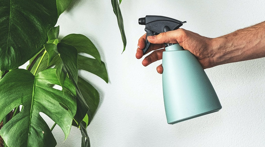 misting your plant