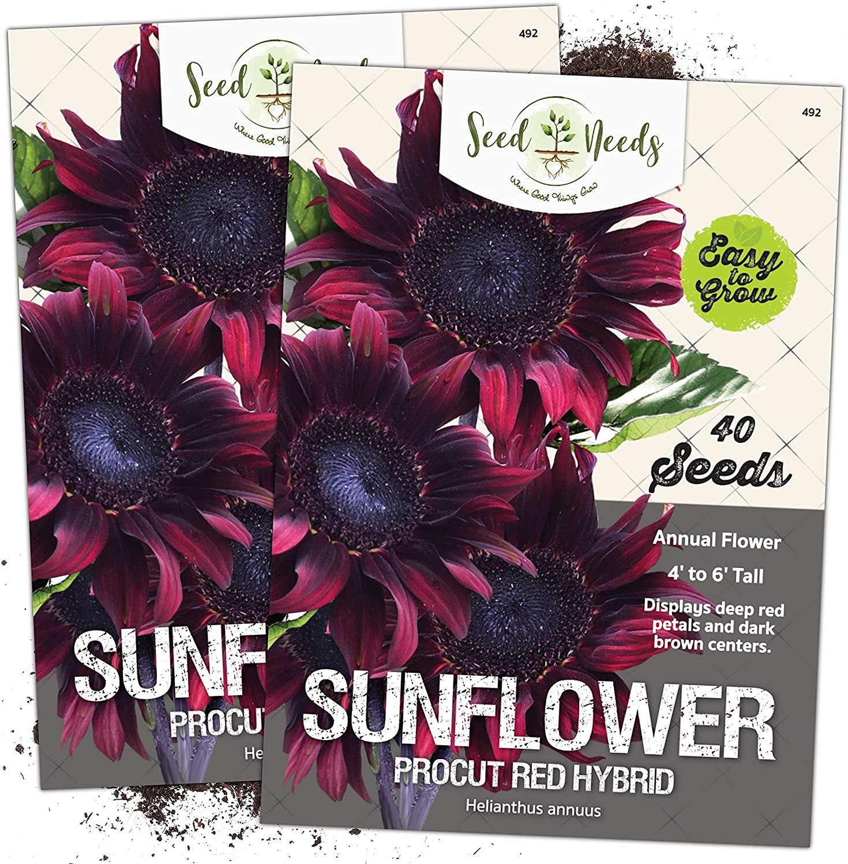 Seed Needs ProCut Red Sunflower Seeds