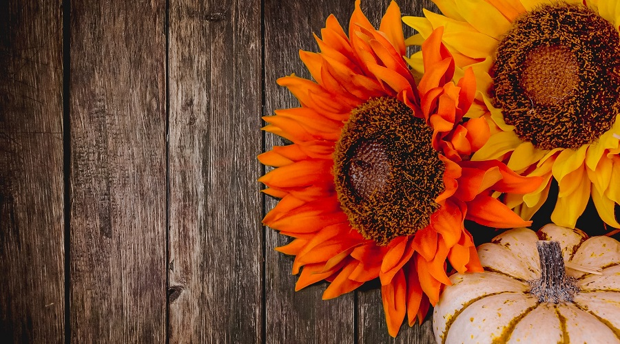 fall colored sunflower on wooden table