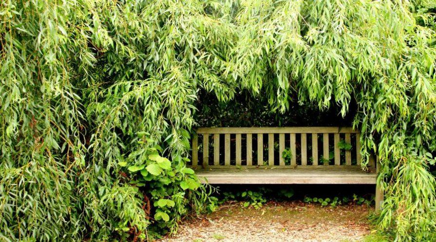 garden bench tucked away