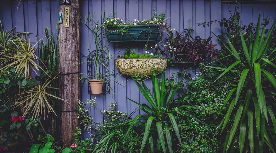 vertical garden outdoors