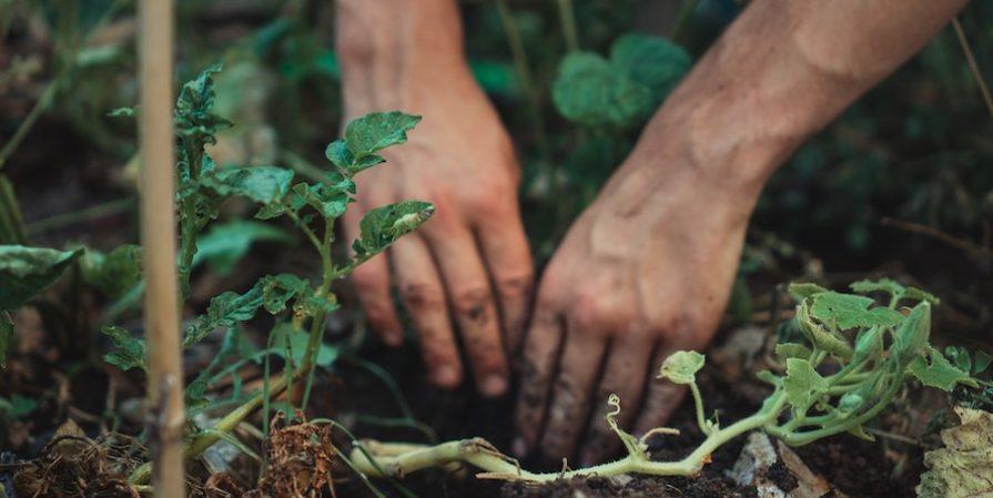 Hands Digging In Soil