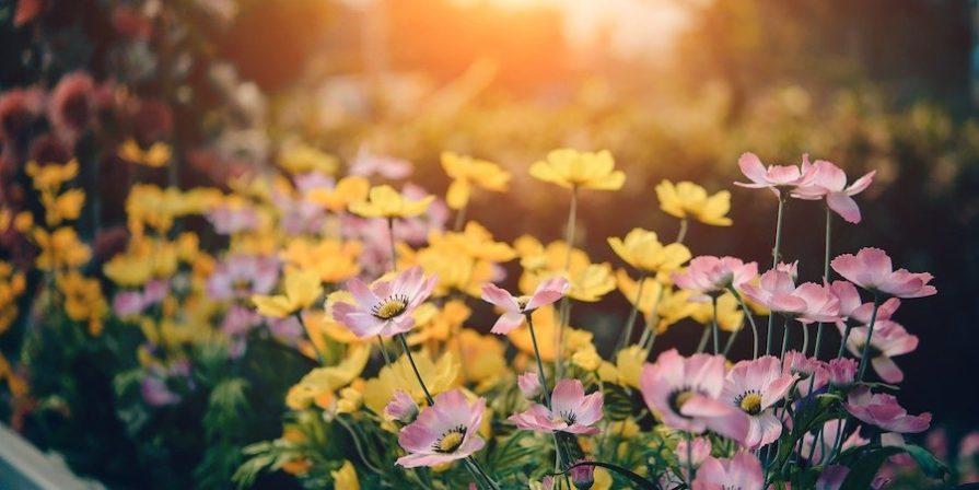 Flower Garden In The Sun