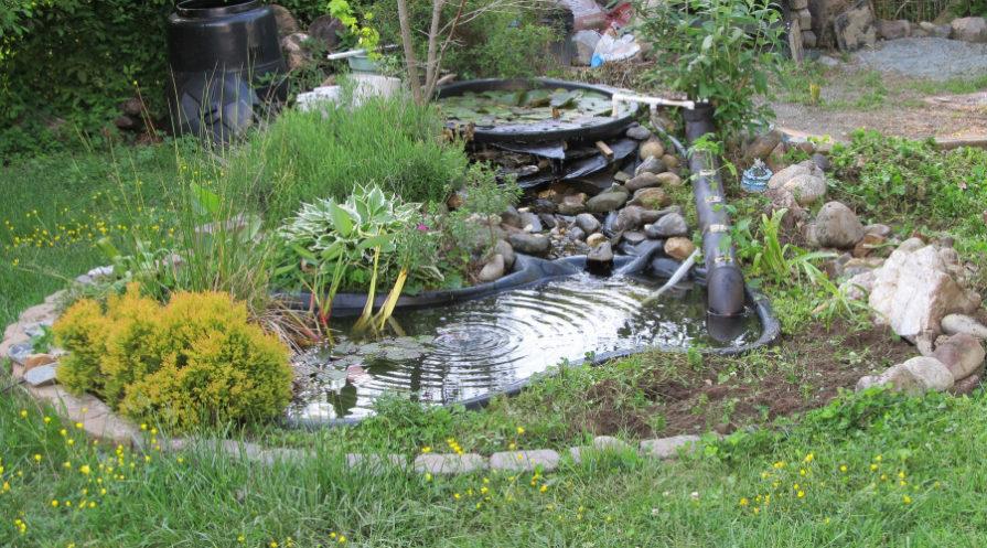 Backyard pond with plants all around