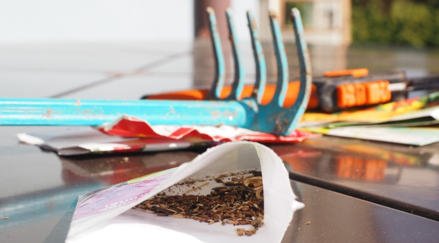 A packet of seeds sitting open on a patio table next to garden tools